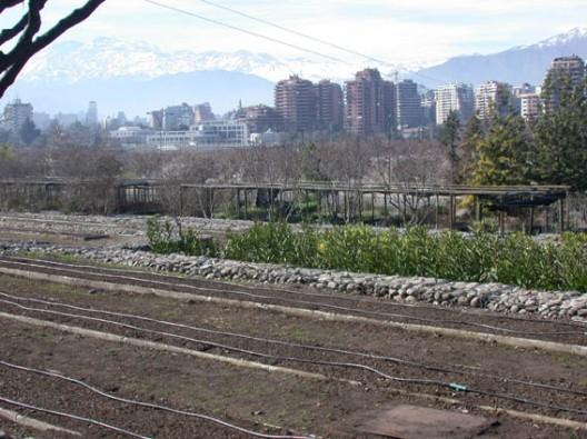El chagual jard n bot nico para santiago plataforma urbana for Vivero el botanico