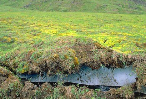 1298933547_o_melting_permafrost_1962.jpg