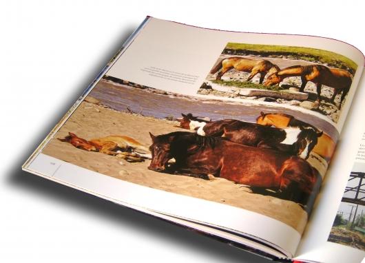 1361271414_foto_4_caballos.jpg