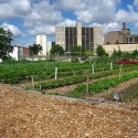 detroit-urban-farm-1