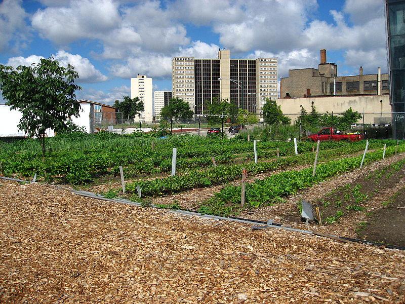 detroit-urban-farm-1