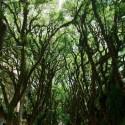 © Stephen Mensajero vía Treehugger