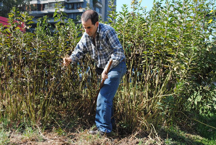 Día de la Tierra. Red de Agricultura Urbana en Av. Américo Vespucio.