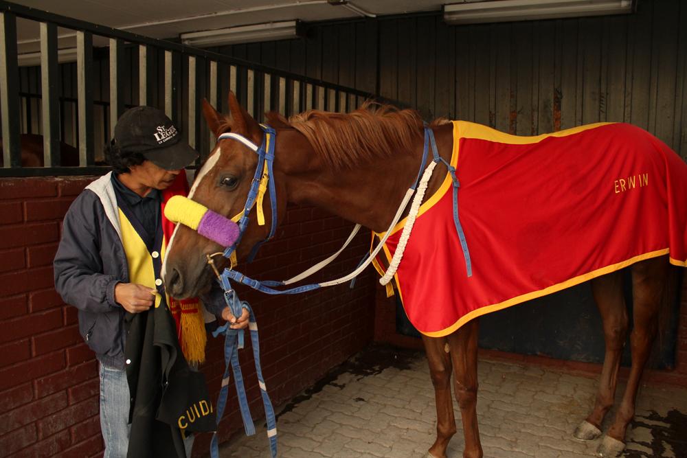 """En el """"Box"""" donde se prepara a los caballos antes de cada carrera. © Plataforma Urbana."""