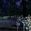 forestoflightbm-1-1000x744