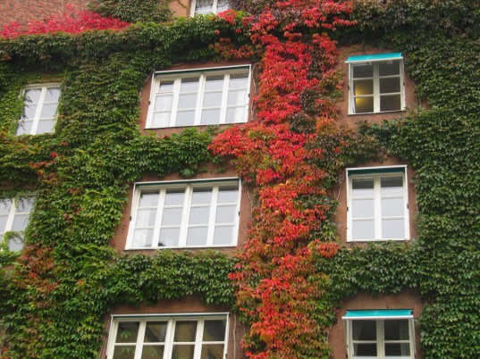 Green-wall-537x402