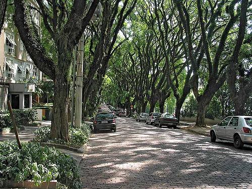 calle verde