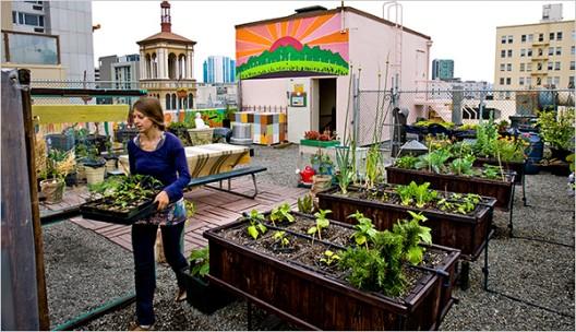 Un huerto urbano en un techo de San Francisco. © Peter Dasilva para The New York Times.