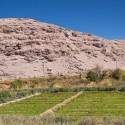 Lasana oasis