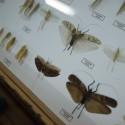 Museo Entomológico 1