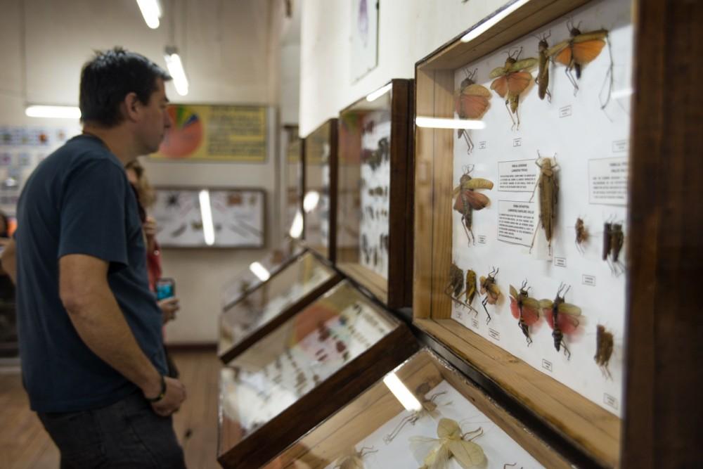 Museo Entomológico.