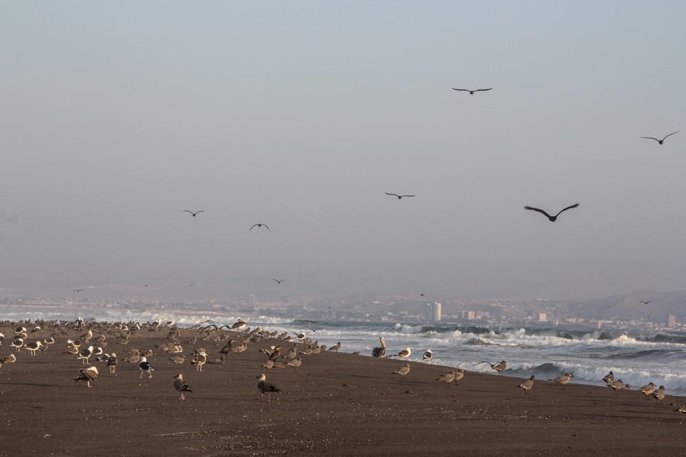Aves migratorias en el Humedal