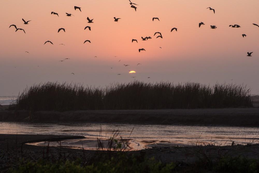 Humedal y desembocadura del Río Lluta