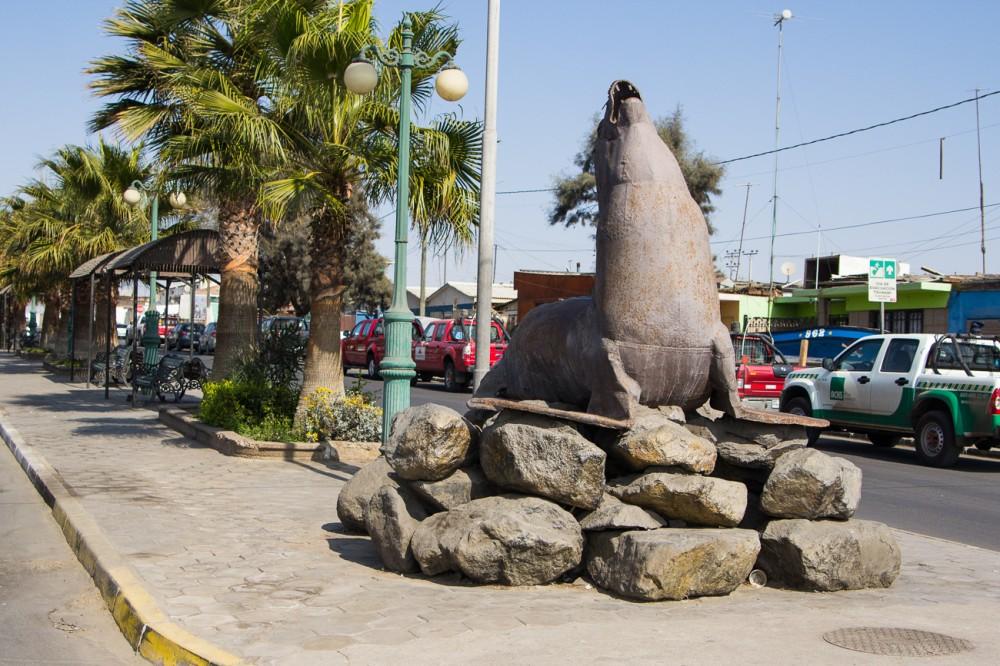 Plaza lobo marino