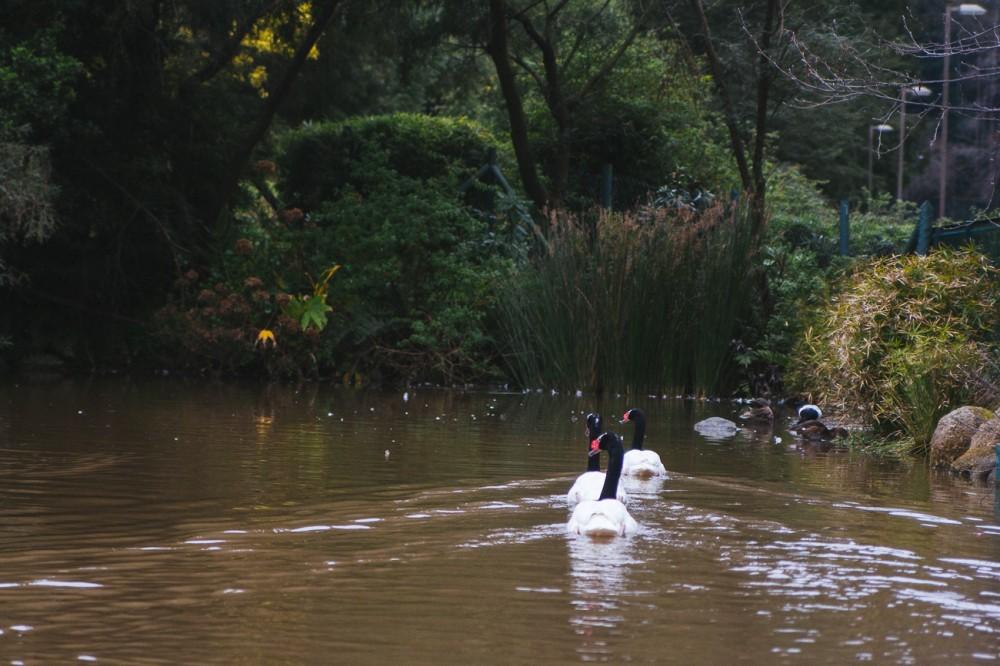 Laguna Los Patos 2