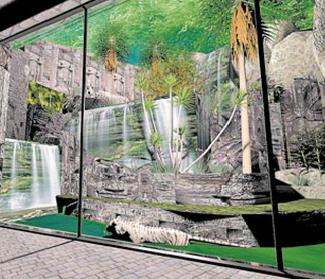Nuevo espacio para tigres en Zoológico Metropolitano