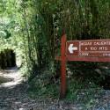 Parque Nacional Puyehue 6
