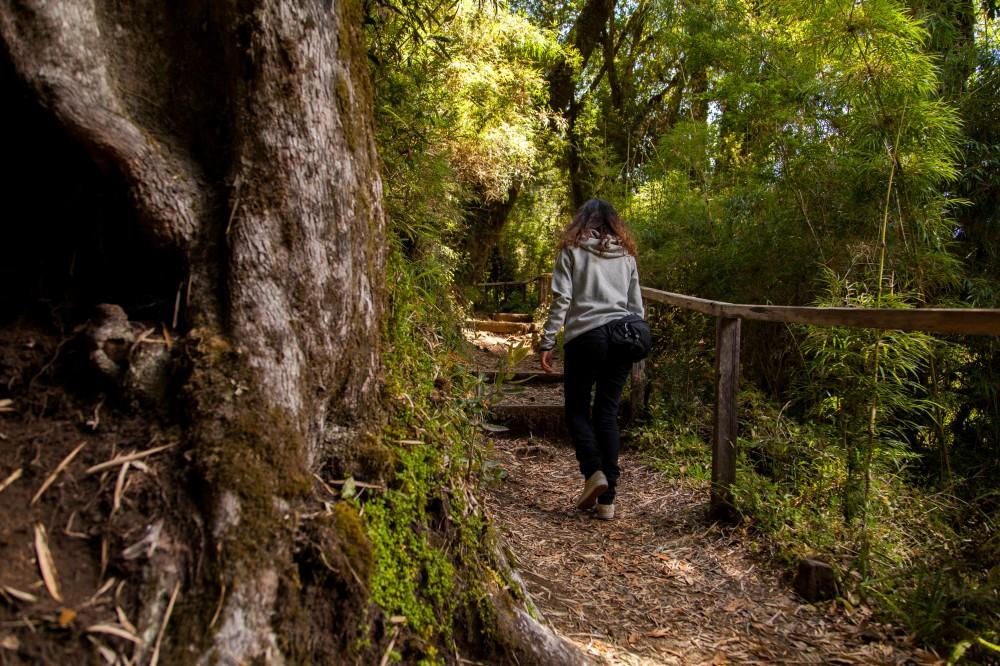 Parque Nacional Puyehue 7