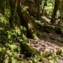Parque Nacional Puyehue 9