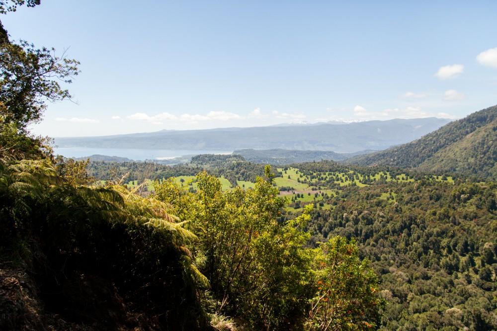 Parque Nacional Puyehue 15