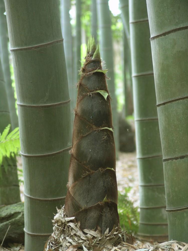 53b6d91ec07a80a343000204_rascacielo-org-nico-crece-a-medida-que-sus-residentes-reciclan_bambou