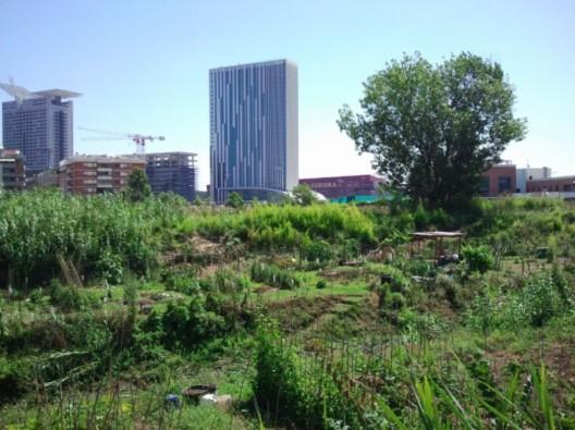 Agricultura Urbana en el Sur de Roma