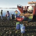 barcazas sequia chiloe calbuco
