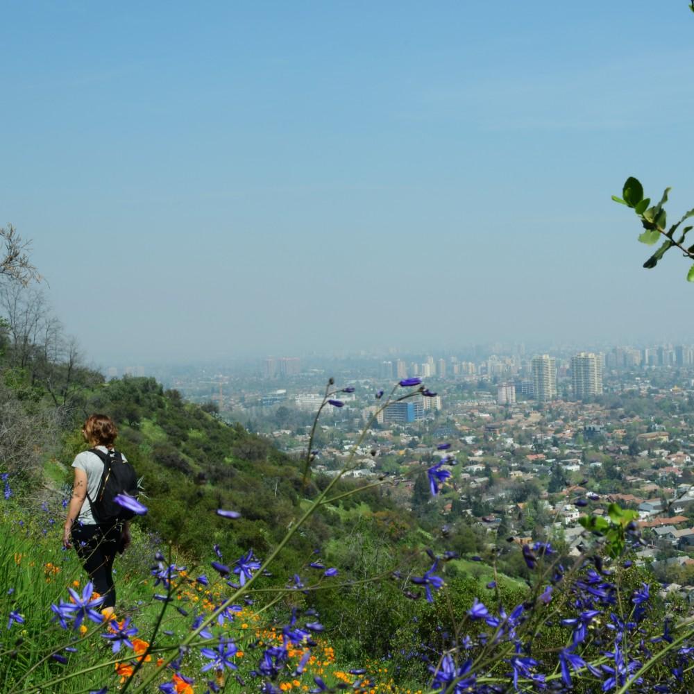 Cerro Calán. Primavera 2014. Fuente SCI. Cortesia Santiago Cerros Isla.