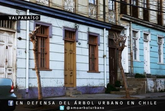 Valparaíso. Fuente imagen: En Defensa del Arbol Urbano en Chile, vía Facebook.