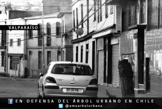 En Defensa del Arbol Urbano en Chile 3 Valparaiso