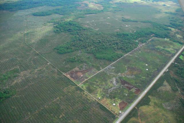 """Plantaciones Forestales en Ancud. Fuente investigación: """"Agua en Chile""""."""
