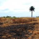 reforestacion cerro la pamela talcahuano