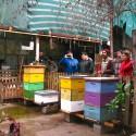 Huerto Libertad, Barrio Yungay. © Plataforma Urbana