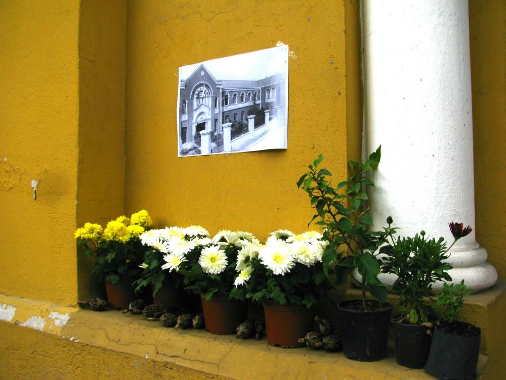 Huertos urbanos en el Museo de la Educación Gabriela Mistral, Barrio Yungay © Plataforma Urbana