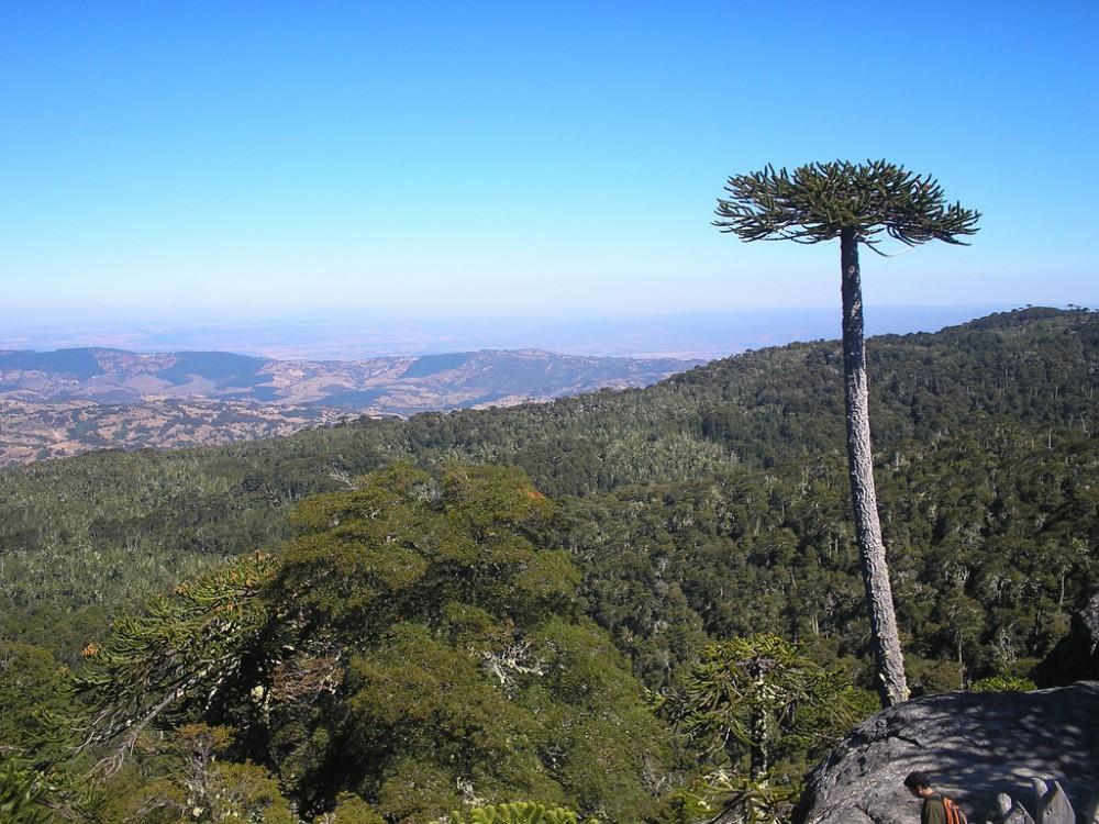 Piedra del Águila en el Parque Nacional Nahuelbuta. © Flickr Usuario: María Gabriela Poblete Hinojosa. Licencia CC BY 2.0