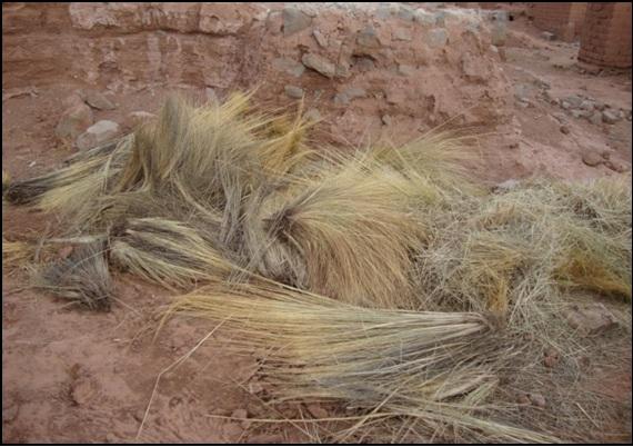 Se utiliza Paja Iru, que luego es cortada en pequeños pedazos, actúa como un sistema de protección en las épocas de lluvia. Fuente: Eduardo Omar Soto 2014.