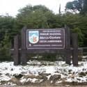 parque-nacional-alerce