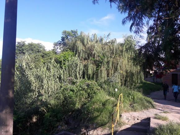 Vista de la Calle Santa Catalina, se observan una vegetación túpida, acompañadas de arboles de gran porte. 2016.